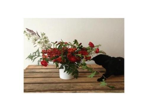 Rosas para la mascota
