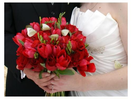 Ramode tulipanes
