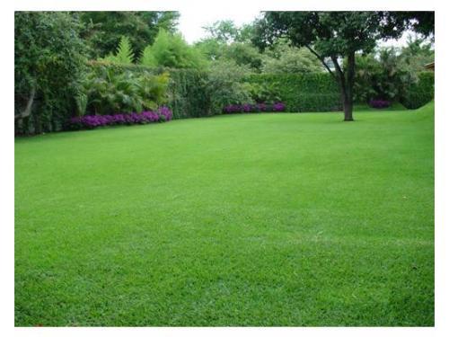 Amplio jardín para tu evento
