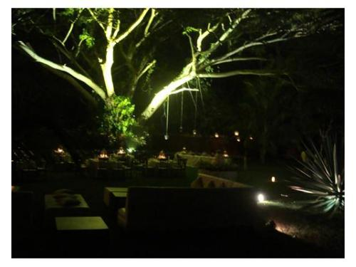 Iluminación verde en árboles