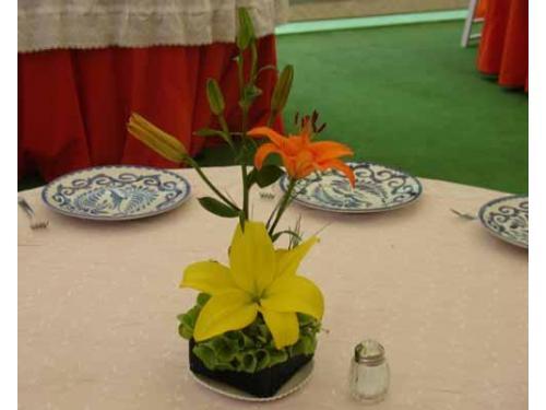 Lilis blanca y naranja